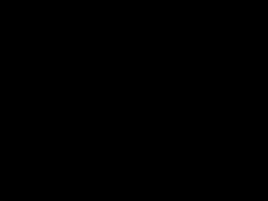 Beluga lookout at night