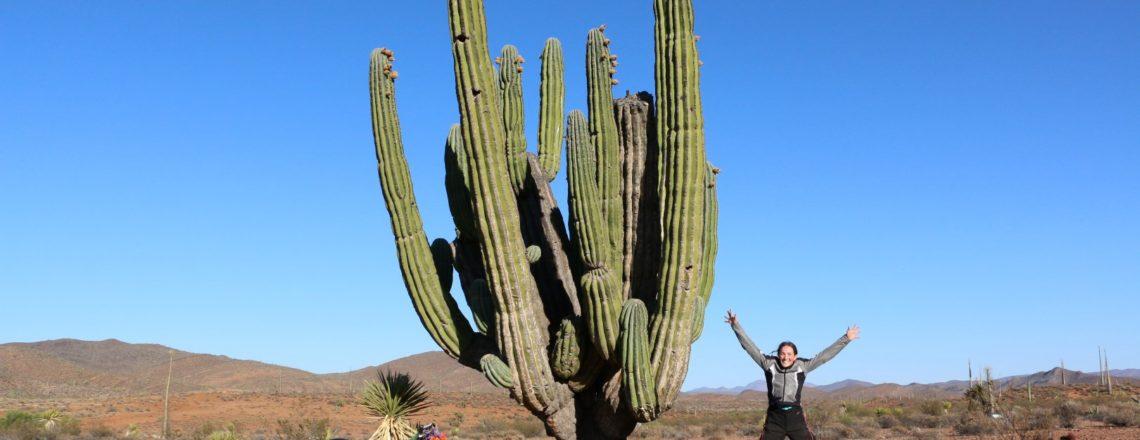 Cactus ahoy! San Quintin to Catavina